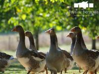 Idée de Sortie Alles sur Dordogne Sarl Arvouet