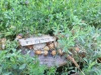 L'escargot sur Loire-Credit-l-escargot-sur-loire