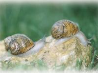 Idée de Sortie Farges Allichamps Visites secrètes : Escargots le Jacquin