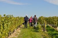 Idée de Sortie Auzouer en Touraine Rendez-vous dans les vignes