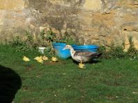 Idée de Sortie Châtres Domaine de Loqueyssie