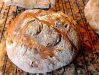 Idée de Sortie Calès Le Pain d'Antan, paysan boulanger