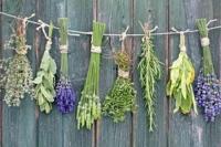Idée de Sortie Gaillac d'Aveyron Le Chaudron aux Bonnes Herbes