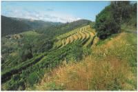 Idée de Sortie Montsalvy Les Terrasses du Haut-Mindic (Vins d'Entraygues - Le Fel)