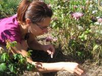 Idée de Sortie Arvieu La Fée aux herbes - Plantes médicinales - Colis de viandes et légumes