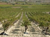Idée de Sortie Rochefort du Gard Cave des vignerons d'Estezargues