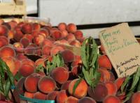 Idée de Sortie Lamotte du Rhône EARL les digues