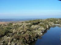 Au Teich comme un oiseau sur le sentier du littoral Arcachon