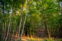 Idée de Sortie Contres La forêt de Choussy