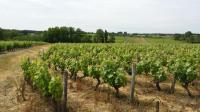 Idée de Sortie Saint Aignan Forêt et vignoble