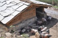 Idée de Sortie Ascain Suhalmendi : à la découverte du porc basque