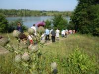 Idée de Sortie Bazas Parcours nature du lac de la Prade