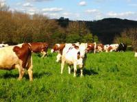 Idée de Sortie Orliaguet Autours des produits laitiers à Sainte Nathalène