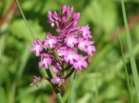 Idée de Sortie Clermont de Beauregard Chemin des orchidées - Queyssac