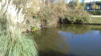 Idée de Sortie Le Bouscat Bruges, étang et bassins