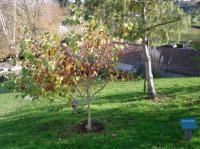 Idée de Sortie Espelette L'Arboretum du Père Armand David