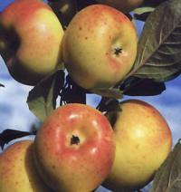Idée de Sortie Eymouthiers Vergers des fruits anciens Etouars et Soudat