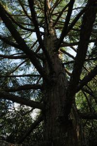 Idée de Sortie Chalais Arboretum de Montagnac