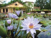 Le Jardin des Nénuphars Latour-Marliac Lot et Garonne