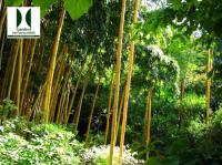 Idée de Sortie Alles sur Dordogne Jardin les Bambous de Planbuisson