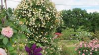 Idée de Sortie Razac d'Eymet Jardin Pimpinellifolia