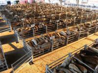 Idée de Sortie Laissac Visite guidée du marché aux bestiaux de Laissac