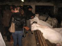 Idée de Sortie Ladinhac Gaec de la chèvre Blanche (cabécous)