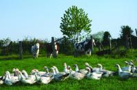 Idée de Sortie Colombiès La ferme des Cazes, vente directe produits frais et conserves de canards gras