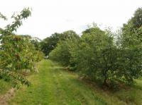 Idée de Sortie Yvernaumont Verger Traditionnel du Patrimoine Fruitier Ardennais