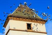 Idée de Sortie Castelnau d'Estrétefonds PIGEONNIER DE L'OFFICE DE TOURISME