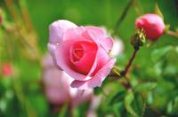 Jardin personnel d´André Eve Loiret