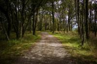 Idée de Sortie Ustaritz Forêt d'Ustaritz