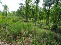 Idée de Sortie Nogaro Forêt domaniale de Laveyron