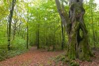 Idée de Sortie Nogent en Othe L'arbre du Pied Cornier