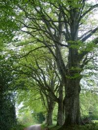 Idée de Sortie Lestrade et Thouels Sentier botanique des Arasses