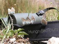 Idée de Sortie Camarès Hungry Bird Tours