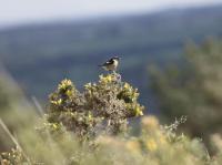 Idée de Sortie Locarn Site naturel des Landes de Locarn