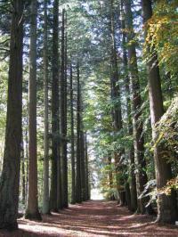Idée de Sortie Omont Arboretum de Vendresse