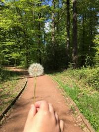 Idée de Sortie Thénioux L'Espace Naturel Sensible : « Sentier de la Salamandre »