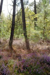 Idée de Sortie Presly Espace Naturel Sensible : « Tourbière des Landes »