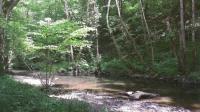 Idée de Sortie Saint Jeanvrin L'Espace Naturel Sensible : « Le Moulin des Fougères »