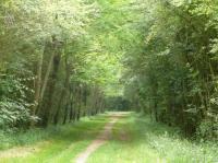Idée de Sortie Coings Bois de la Ringoire