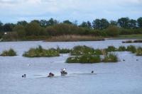 Idée de Sortie Mézières en Brenne Observatoire de l'étang des Essarts (Réserve naturelle de Chérine)