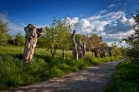 Idée de Sortie Saint Avit Les trois chemins/Chemin des Trognes