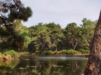 Réservoirs de Piraillan Arcachon