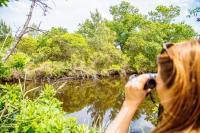 Idée de Sortie Lège Cap Ferret Réserve naturelle nationale des Prés salés d'Arès - Lège Cap Ferret