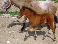 Idée de Sortie Carves Ferme Equestre Le Bugou