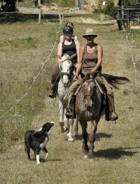Idée de Sortie Pezuls Ferme Equestre/Poney-club de Belle Oreille