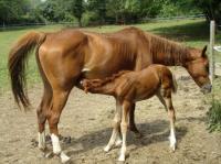 Idée de Sortie Grignols Centre Equestre de Neuvic