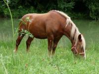 Idée de Sortie Montagnac la Crempse Centre Equestre Poney Club Elevage de l'Ile